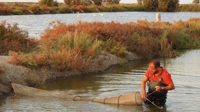 Esteros de Manego, nueva Reserva Ecológica en Trebujena