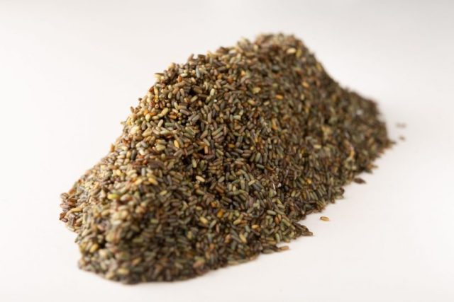 El cereal marino cultivado por Ángel León, de Aponiente