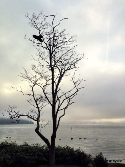 A misty morning.