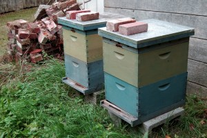 Bees from the Urban Bee Company.