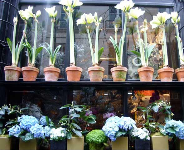 paris_flower_shop2