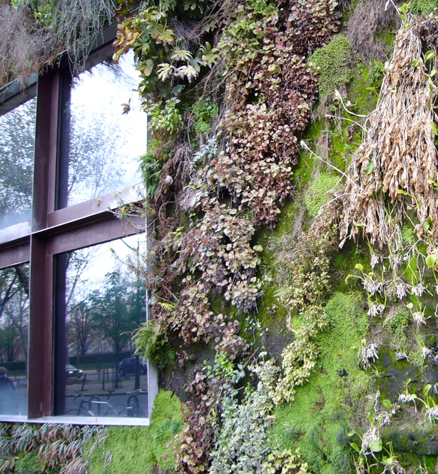 branley_window2