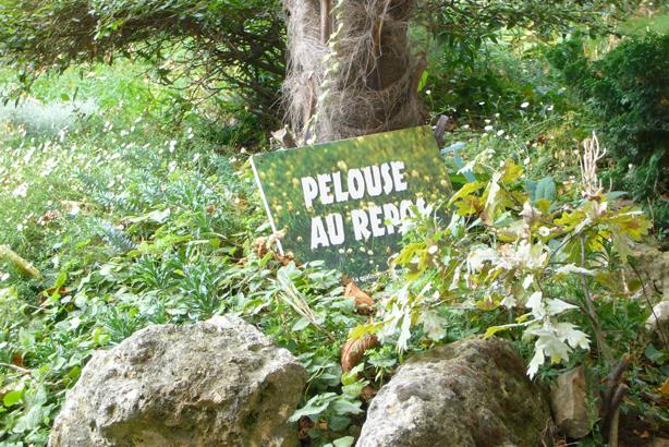 pelouse_repose