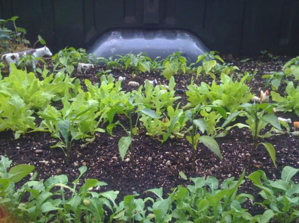 truck-garden2
