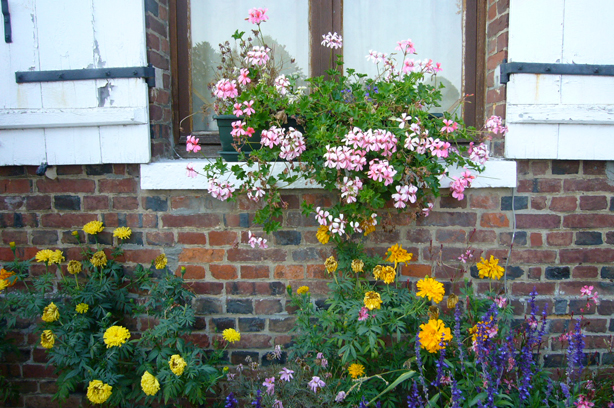 beauficels_window_box
