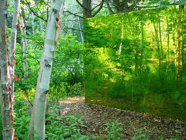forested_reflections