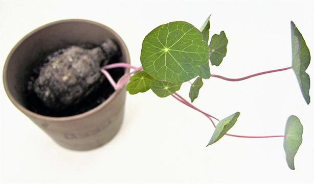 seed_bomp_plant