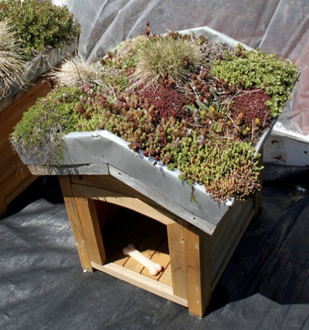 Eco Chic Pet Houses Offer Creature Comforts Green Roof