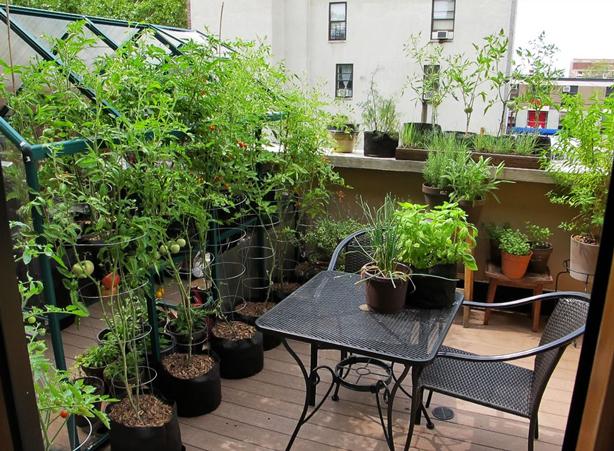 Horta no terra o paisagismo legal for Terrace 33 city garden