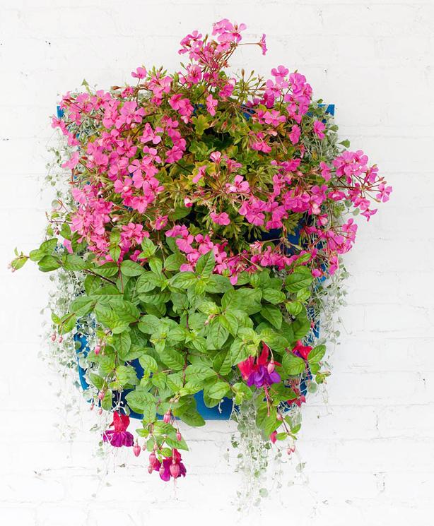 Five Easy Steps For Creating An Indoor Outdoor Vertical Garden Or