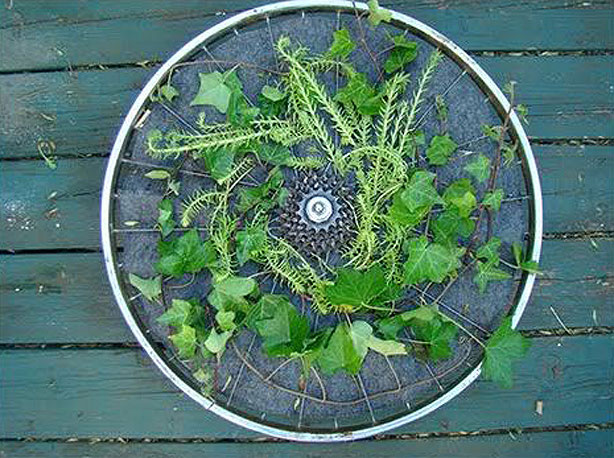 Bicycle-Wheel-VerticalGarden