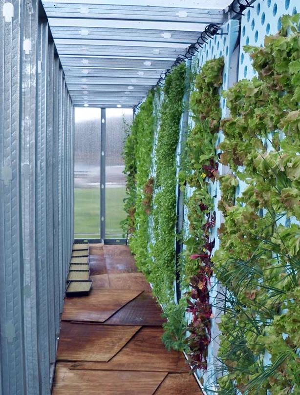 farmery-inside-greenhouse