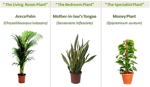 pessoal-fresh-air-3-plantas