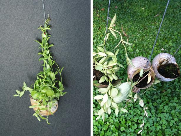 opus-studio-kokedama-hanging-gardens-in-shells