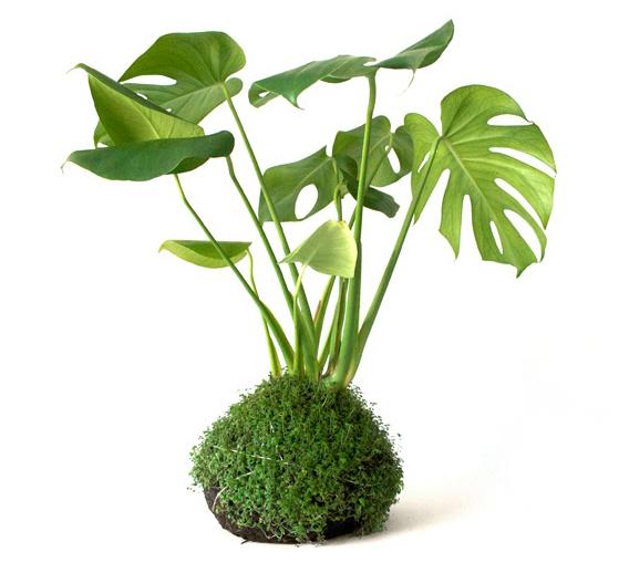 opus-studio-kokedama-hanging-gardens-single-piece