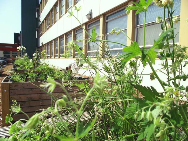 global-garden-raised-beds2