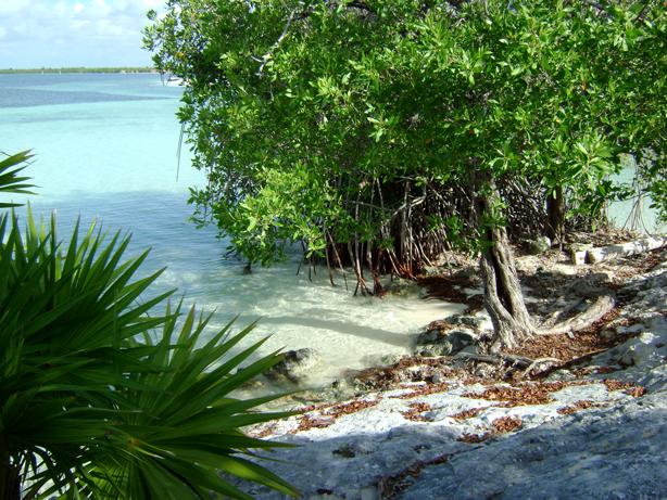 nizuk_mangrove_urbangardensweb