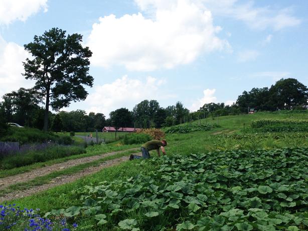 stone-barns-fields-urbangardensweb