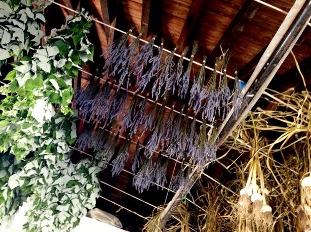 stone-barns-lavender-drying-urbangardensweb