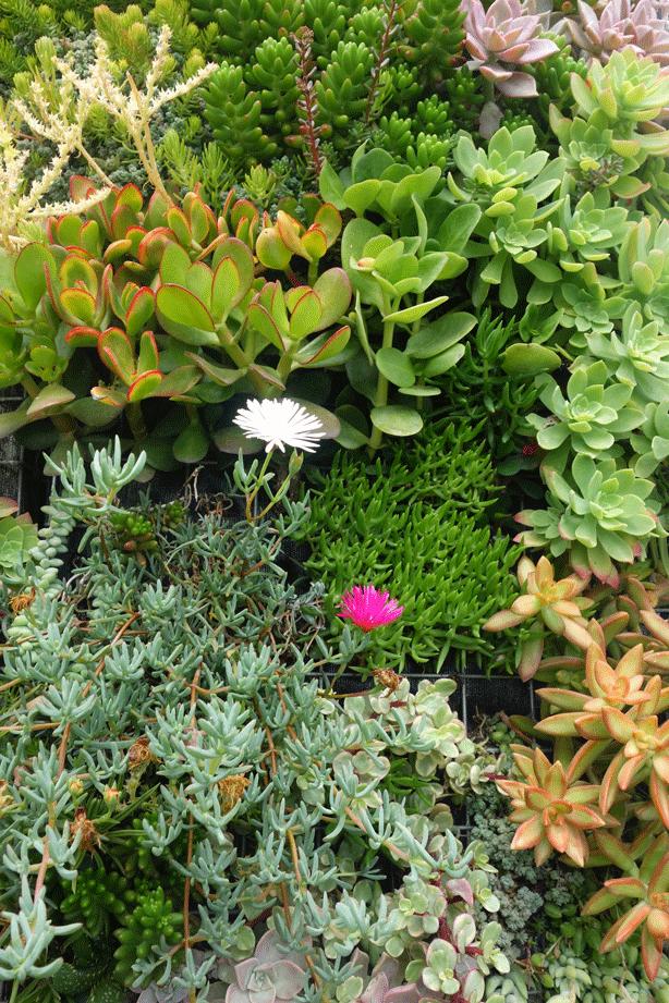 granen-vertical-succulent-garden-plants-urbangardensweb
