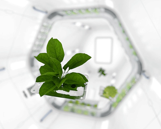 NASA-Plant-PiotrSzpryngwald