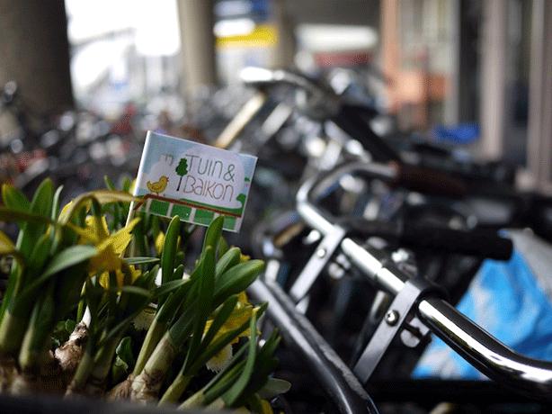 dutch-guerrilla-gardening-by-bicycle-guerrilla-gardens