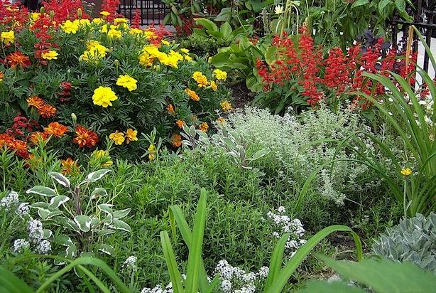 CU garden 300 Stuy crop