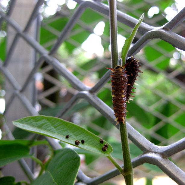 husos_biolclimate_building_garden_Caterpillar_urbangardensweb