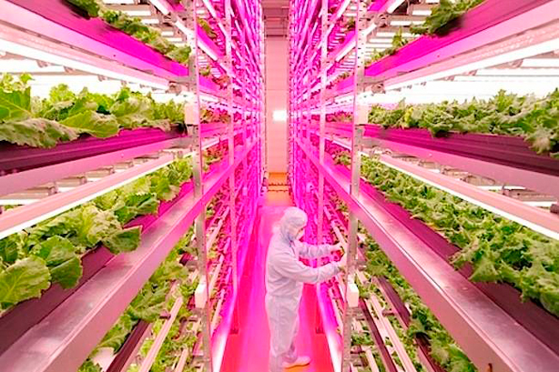 Indoor & Underground Urban Farms Are Growing