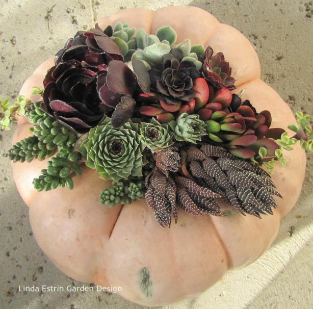 fall pumpkin and succulents