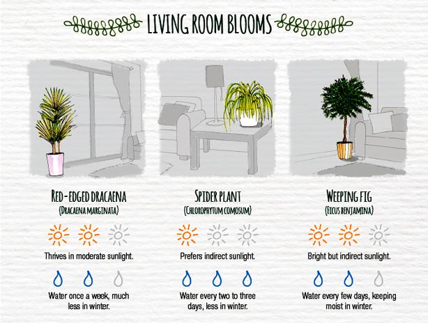Indoor-Plant-Care-Cheatsheet-LIVINGROOM