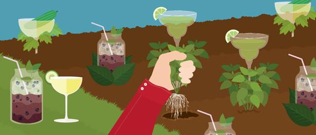 garden-to-glass-cocktails-header