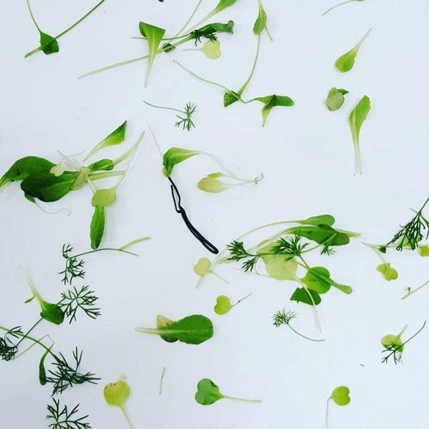 plants-plantcube-indoor-farm-urbangardensweb