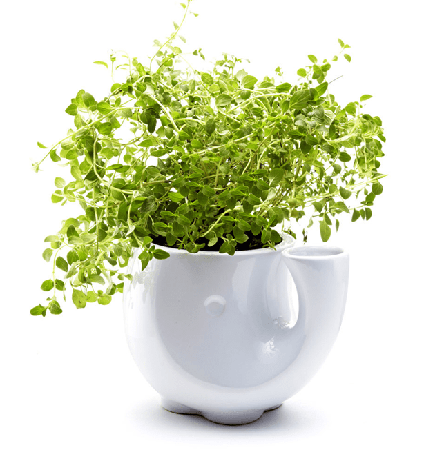self-watering-eleplanter-urbangardensweb
