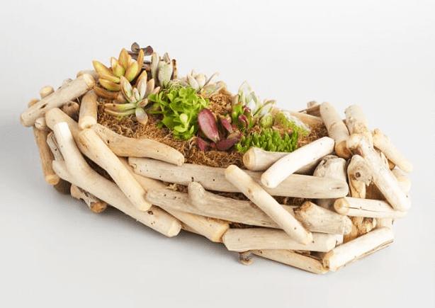 world_market_succulent_planter