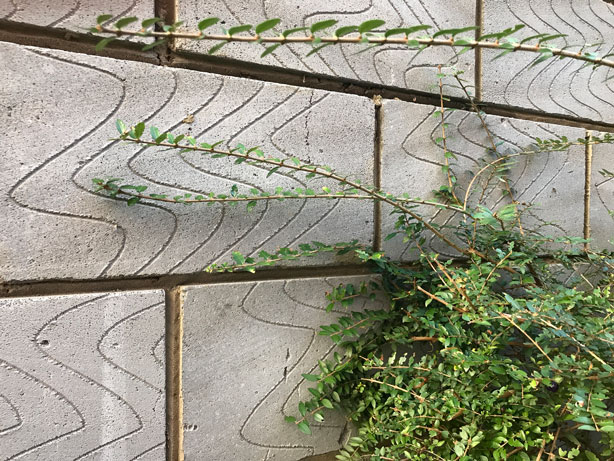 patterned_concrete_tiles_London_secret_garden_urbangardensweb
