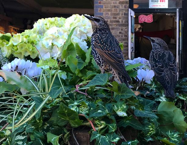 Birds on flower cart in London's Camden Market