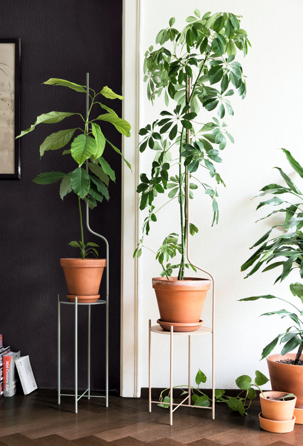 liana_plant-stand-ve-destekleri-büyümek-ile-your-bitkiler-urbangardensweb