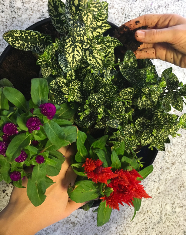 plant_pacakge_subscription_container_garden_monthly_box