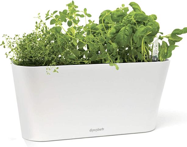 aquaphoric_hydroponic_windowsill_countertop_planter