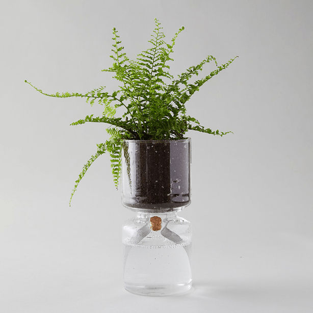 self-watering_glass_planter_indoor_gardening_garden_gifts