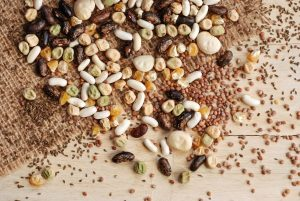 Seeds Bring Success In Vegetable Gardening