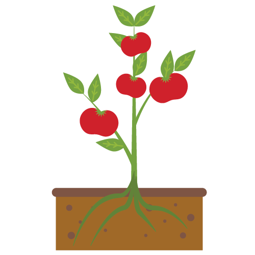 Houston Community Garden Tomato Plant Illustration