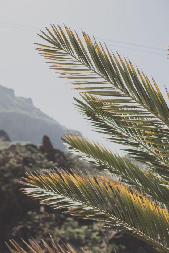 Seikon-Gran-Canaria-Spain-4