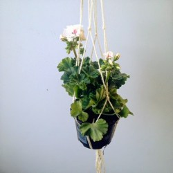 Urban Jungle Bloggers: Offer a Plant to a Friend