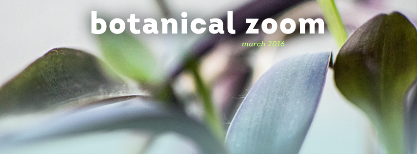 Urban Jungle Bloggers in March: Botanical Zoom