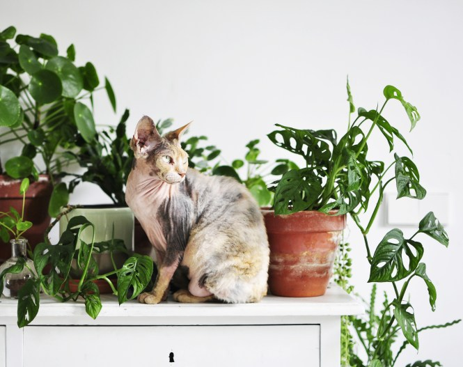 Living With Plants And Cats