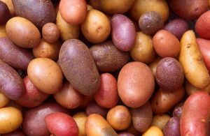 There are over 5000 potato varieties world wide