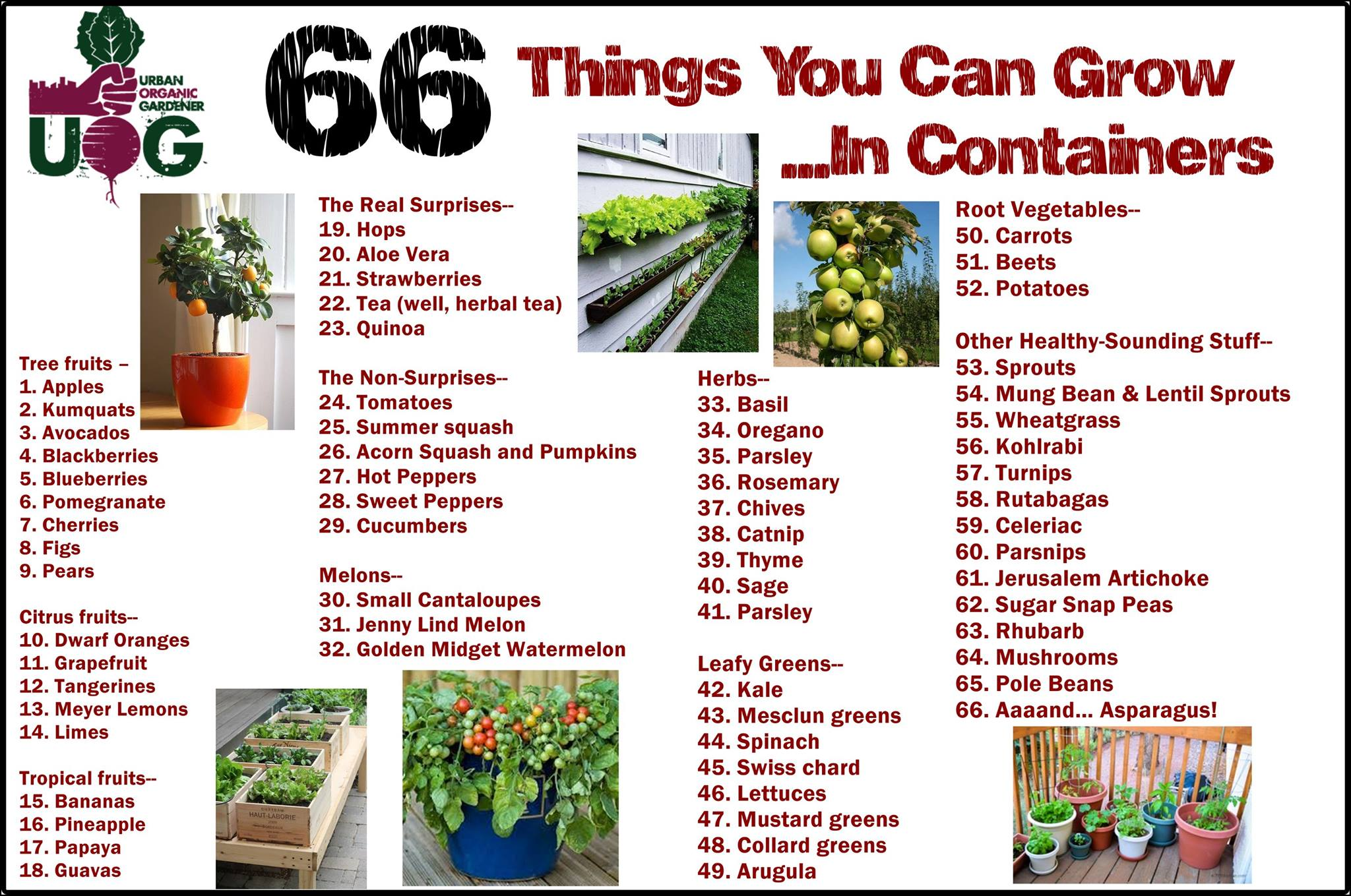 66 Things You Can Grow In Containers No Excuses Just
