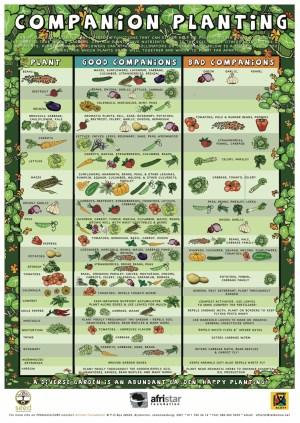 Urban Organic Gardening: Companion Planting Chart  Urban